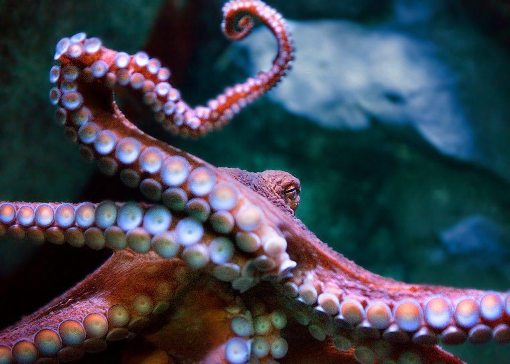 Aquarium of the Pacific Photo Night